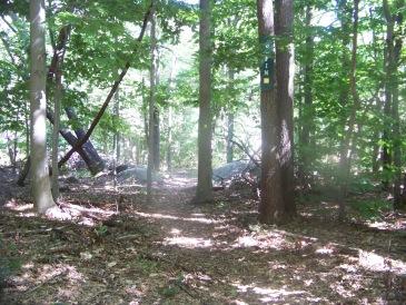 elfin trail in the summer