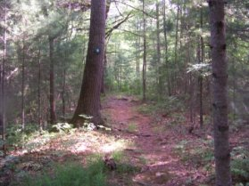 trail marked by letters in White Woods in Cohasset
