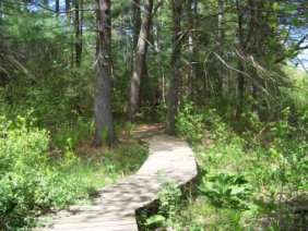 boardwalk ends and a loop trail begins in willow brook farm