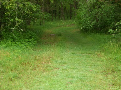 grassy trail entering the woods at willow brook farm in pembroke