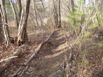 trail lined with forest material in rockland town forest