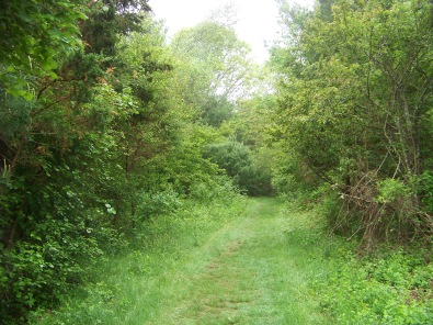 trail through orchard at willow brook farm