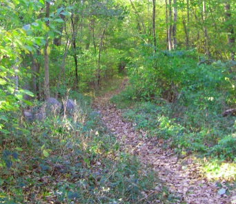 The multi use hiking trail at the South Pleasant St entrance of Wompatuck State Park.