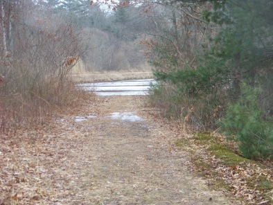 trail between ponds at whiton woods in duxbury