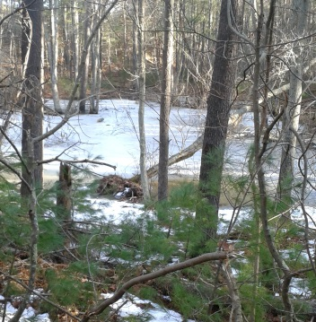 frozen woodland pool at thaddeus chandler sanctuary