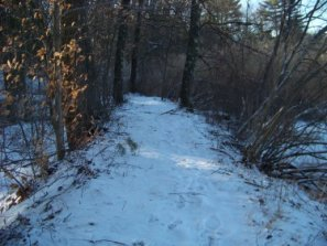 hiking trail leads away from marsh