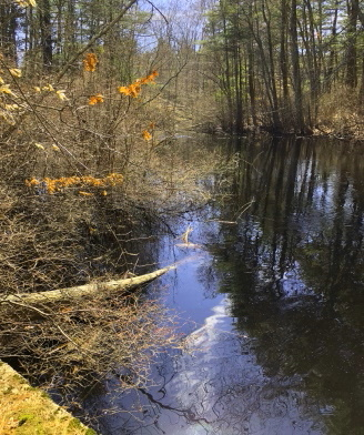Stump brook widens out