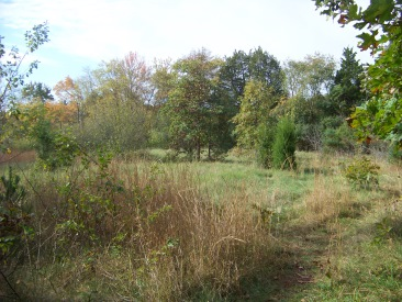 meadow at northern end of Cleveland Pond
