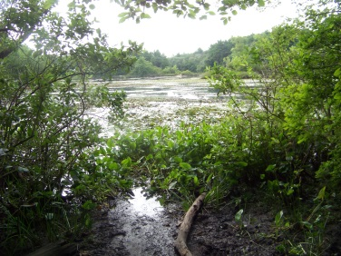 grown in boat launch at triphammer pond