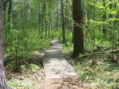 first boardwalk on the Todd trail in willow brook farm preserve