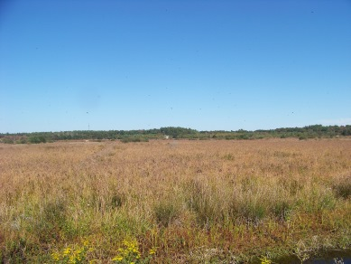 cranberrry bog with birds circling above at BWMA