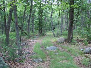 peaceful hiking trail in holbrook