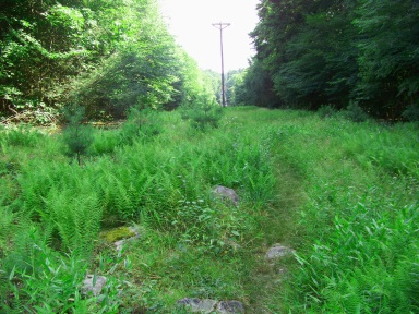 narrow grassy path through a utility line on Mount Hope in Wompatuck State Park.
