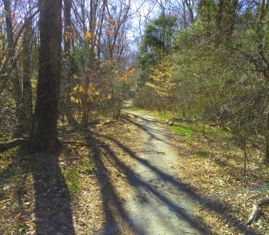 Old asphalt on the trail through the former National Fireworks property on the Rockland side.