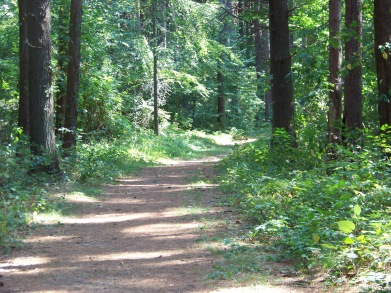road like start to George Washington Forest trail