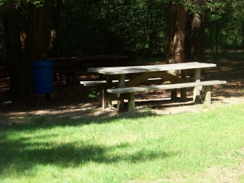 rockland town forest picnic area