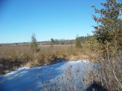 view of cedar swamp from indian crossway