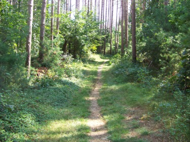 wide grassy trail with worn path in the middle at george washington forest