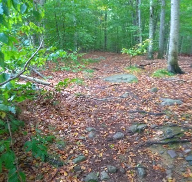 Rocky hiking trail soon smooths out.