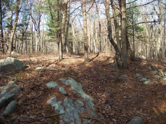 primitive hiking in holbrook town forest