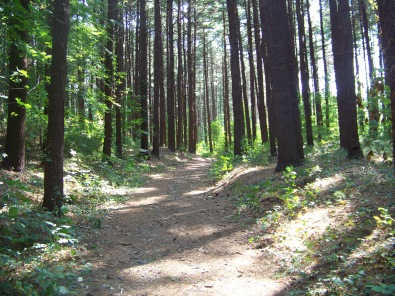 deep forest feeling at george washington forest