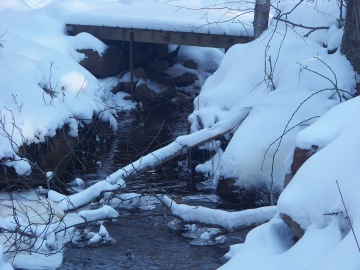 stream flowing under a bridge in rockland town forest