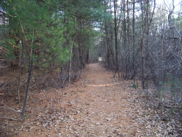 a trail to x country ski in rockland town forest