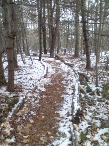 trail through stand of evergreens on jims trail