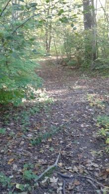 trail on the peninsula at rocky run