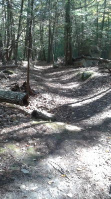 downhill on cart path at rocky run conservation area