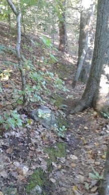 narrow rugged trail along indian head river at rocky run