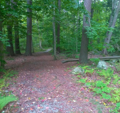 Two trails starting with boardwalks at marker S19 on Union St at Wompatuck State Park.