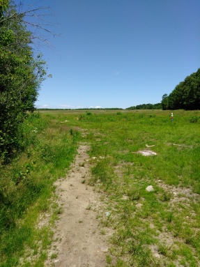 Large field at the beginning of the Thompson Pond Trail in Abington.