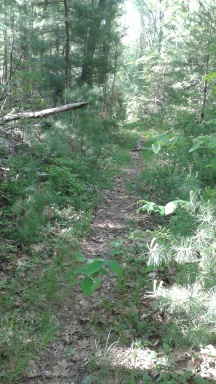less maintained portion of access trail connecting misty meadows to willow brook