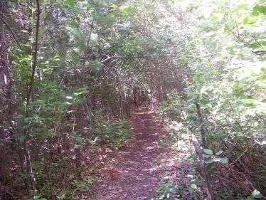 trail thru thicket on Around Cleveland Pond Trail
