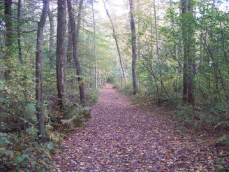 easy to walk dog walk trail