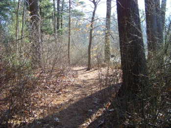 second portion of dog walk trail