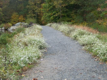 gravel path at dam at ames nowell state par