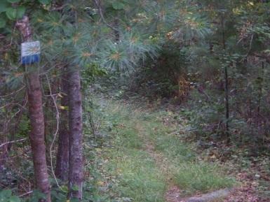 narrow beginning to carl pipes memorial trail