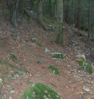 maxwell trail runs along the hillside at bates lane conservation area