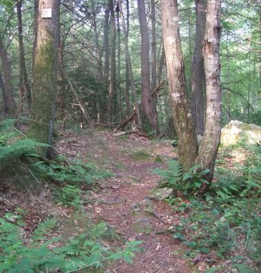 hiking trail climbs after crossing maxwell trail bridge