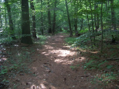 Forested trail in Bates Conservation.