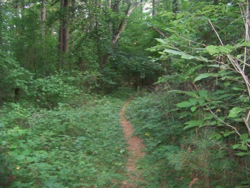 narrow carl pipes trail through ferns