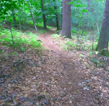 Narrow trail leading from the S19 marker at Wompatuck State Park.