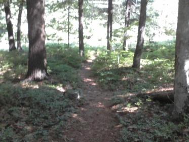 narrow woodland trail at bradford torrey bird sanctuary