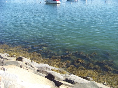 seaweed and clear water at breakwater's edge