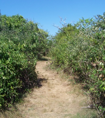 Hiking trail on Bumpkin Island