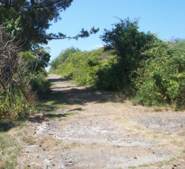 Wide road hiking trail that cuts across Bumpkin Island.