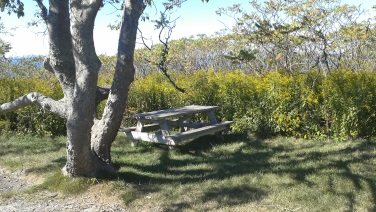 Picnic spot along the main trail across Bumpkin Island.