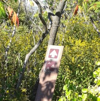 Hiking trail to camp sites on Bumpkin Island.